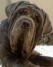 dogface.jpg