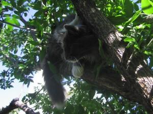 Elvis climbing a tree