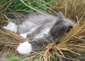 Elvis' grass nap