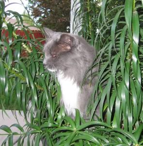 Elvis - lily intruder