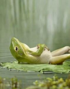 frog in alignment, effortless manifesting