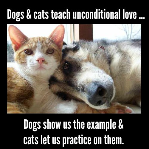 Sometimes I think cats and dogs are here to teach us unconditional love ... dogs show us the example and cats let us practice on them. (J. Maw, Good Vibe Coach)