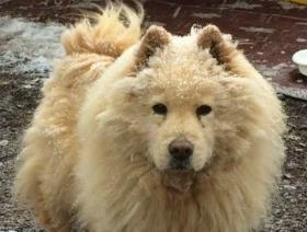 Koda Bear Bear
